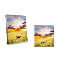 Antelope Springbok Canvas Picture