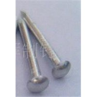 Stainless Steel domed  head Nail