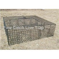 Effective pigeon trap for pigeon control
