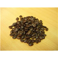 Robusta Coffee Beans and aribica