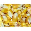 YELLOW CORN/MAIZE AVAILABLE