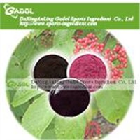 Elderberry Anthocyanin