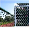 High Quality Galvanized Chain Link Wire Mesh (Anping Factory)
