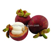 100% Natural mangosteen extract Mangostin 5%-95%