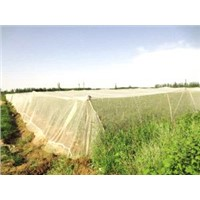 Plastic Agriculture Netting