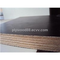 eucalyptus Film Faced Plywood