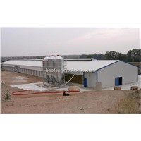 steel broiler chicken shed