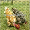 Galvanized or PVC Coated Poultry Netting