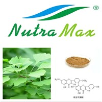 High quality Ginkgo Biloba Extract 24%/6%/<1ppm