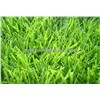 Artificial Grass Supplier - Synthetic Turf & Synthetic Grass