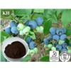 Bilberry extract 15-35% Anthocyanidins (UV),15-35% Anthocyanins (HPLC) ,CAS:84082-34-8