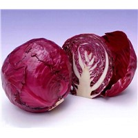 Purple cabbage extract, Purple cabbage red pigment, purple cabbage color, red cabbage color