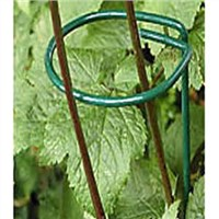 Single ring and stem plant supports for sunflower and daisy