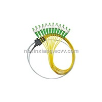 Ribbon Fan-Out Optical Fiber Pigtail