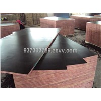 profession film faced plywood manufacturer