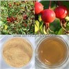 Rose hip Extract--Polyphenols&Vitamin C