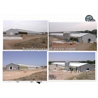 steel frame poultry chicken shed