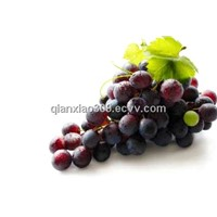 Natural Grape Seed Extract (Proanthocyanidins(OPC) 95%