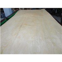 Rotary White Birch Wood Veneer