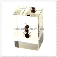 SB3012 Custom Acrylic Gaint Ant Insect Embedment, Resin Gaint Ant Embedment Gaint Ant Block