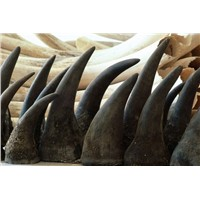 Rhino Horns Available for Sales