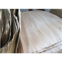 0.3mm size 4 x 8 Red Canarium veneer for plywood