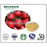 Natural Hawthorn Fruit extract with 5% Flavones