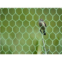 bird mesh chicken fence PVC  Deer Control Fence hex mesh