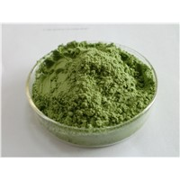 Wheatgrass powder/juice powder