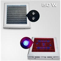 150x1W the Best LED Grow Lights