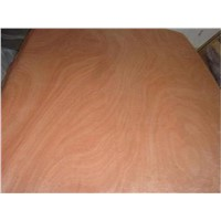 Poplar core veneer for plywood use