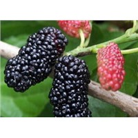 Natural fruit extract anthocyanin mulberry extract powder