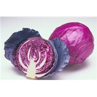 High quality red cabbage extract /anthocyanin