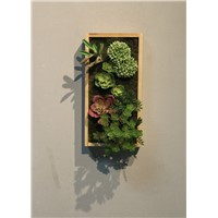 Wooden Frame Green Plant Adornment Picture