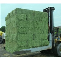Premium quality Alfafa hay (new crop arrival) for Sale