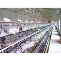 Best-selling A type 96 layers chicken cage for Nigeria chicken cage for Tanzania  (factory)