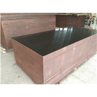 High Quality Film Faced Plywood/1200*2400*15MM