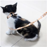 Custom made polyester cat collar and leash
