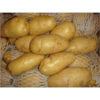 fresh potatoes,garlic,onion,tomatoes etc with best price for sale