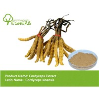 free sample high quality Cordyceps Extract