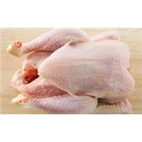 Hot Sale QUALITY Frozen Whole Chicken