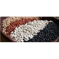 Large White Kidney Beans On Sale