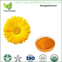 marigold flower extract,marigold flower extract lutein,marigold flower extract powder
