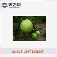 High Quality Guava Leaf Extract