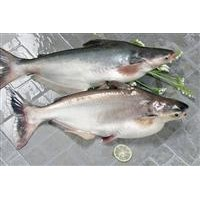 FROZEN ATLANTIC SALMON FISH, markerel,tilapia