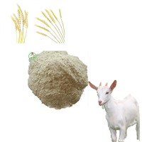 Wheat Gluten Meal Animal Feed