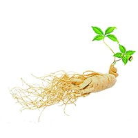 Red Ginseng, American Ginseng Extract, Siberian Ginseng Extract