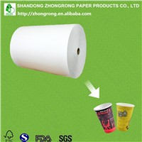 PE Coated Paper Cup Raw Materials Wholesale from China