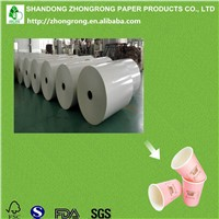 Poly Coated Board in Roll