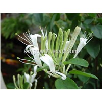 Natural Honeysuckle Flower Extract CAS No 327-97-9 Chlorogenic Acid